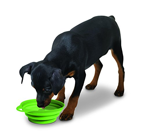 Large Collapsible, Lightweight, and Portable Pet Food & Water Bowl