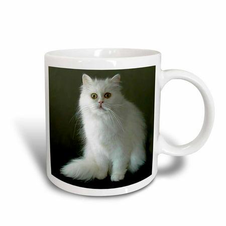 3dRose White Persian, Ceramic Mug,