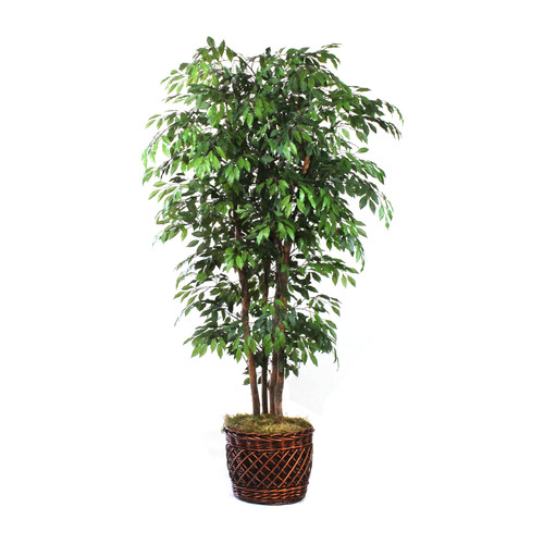 Dalmarko Designs Elegant Ficus Tree in Basket