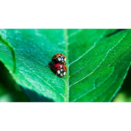 Framed Art for Your Wall Nature Leaf Animals Green Insect Ladybug Pairing 10x13 Frame