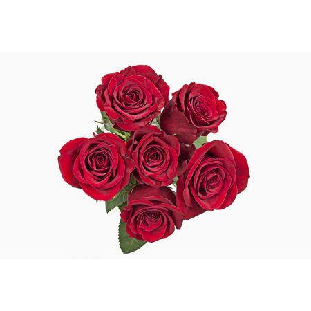 grower2buyer fresh cut flowers half dozen roses 6 stem bunch