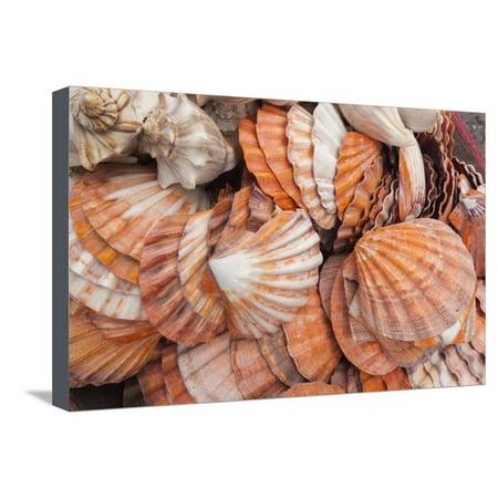 USA, Florida, Florida Keys, Key West, Seashells Stretched Canvas Print Wall Art By Walter Bibikow