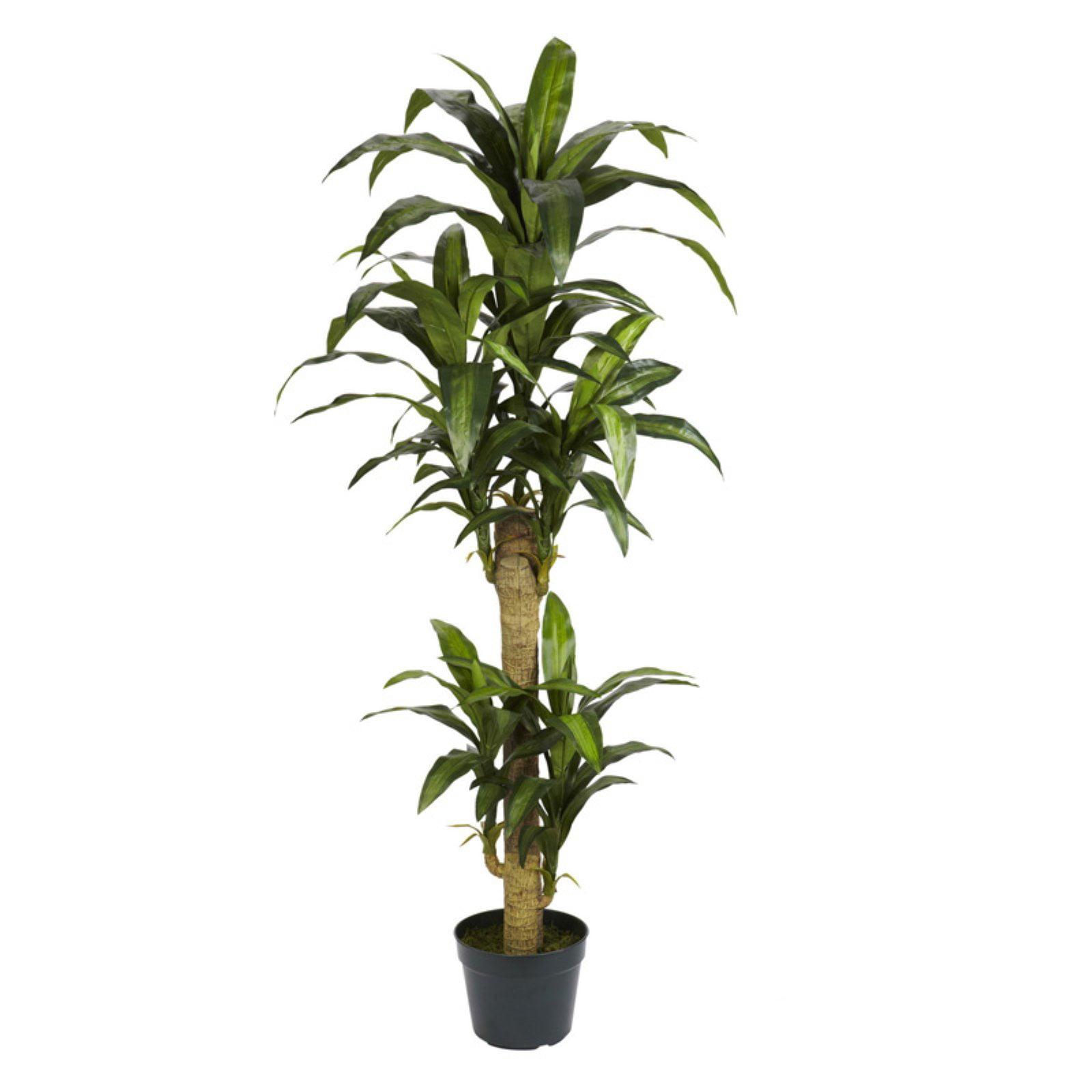 5 ft. Yucca Silk Plant