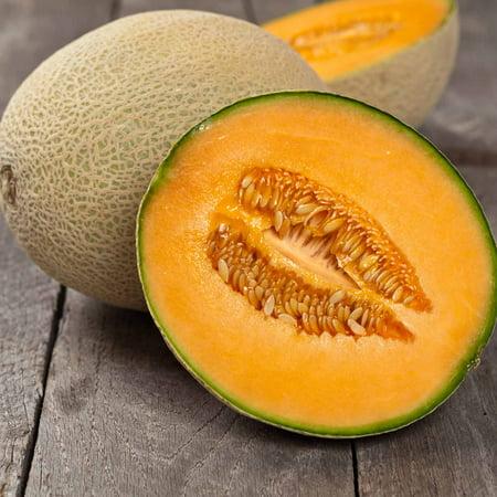 Cantaloupe Melon Garden Seeds   Imperial 45   1 Lb   Non Gmo  Heirloom  Vegetable Gardening Seeds   Fruit