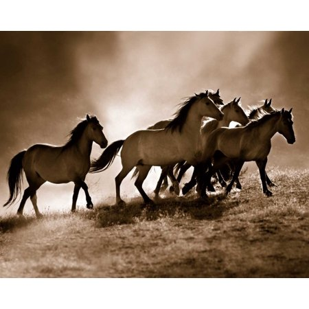 Wild Horses Stretched Canvas - Lisa Dearing (24 x 30) 24 X 30 Giclee Canvas