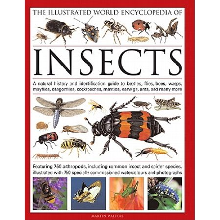 The Illustrated World Encyclopedia of Insects : A Natural History and Identification Guide to Beetles, Flies, Bees, Wasps, Springtails, Mayflies, Stoneflies, Dragonflies, Damselflies, Cockroaches, Mantes, Earwigs, Stick and Leaf Insects, Bristletails, Dipteran, Crickets, Bugs, Grasshoppers, Fleas,