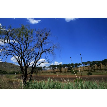 LAMINATED POSTER Field Grass Top Leaves Tree Deep Blue Sky Green Poster Print 24 x - Sky Is Blue Grass Is Green Halloween
