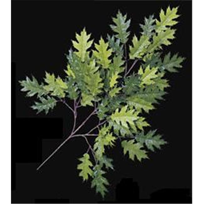 Autograph Foliages P-4691 - 29 Inch Pin Oak Branch - Two-Tone Green - Dozen
