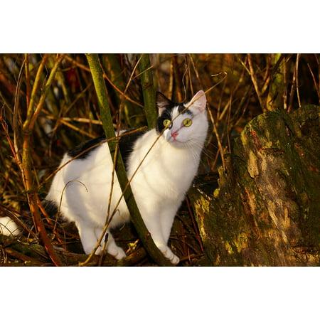 Canvas Print Cat Face Portrait Female Curious Sweet Climb Cat Stretched Canvas 32 x 24