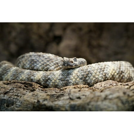 Snake Pattern - Canvas Print Disguised Snake Rattlesnake Pattern Camouflage Stretched Canvas 10 x 14
