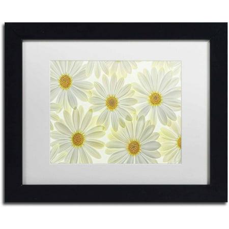 Trademark Fine Art Daisy Flowers Canvas Art by Cora Niele, White Matte, Black Frame