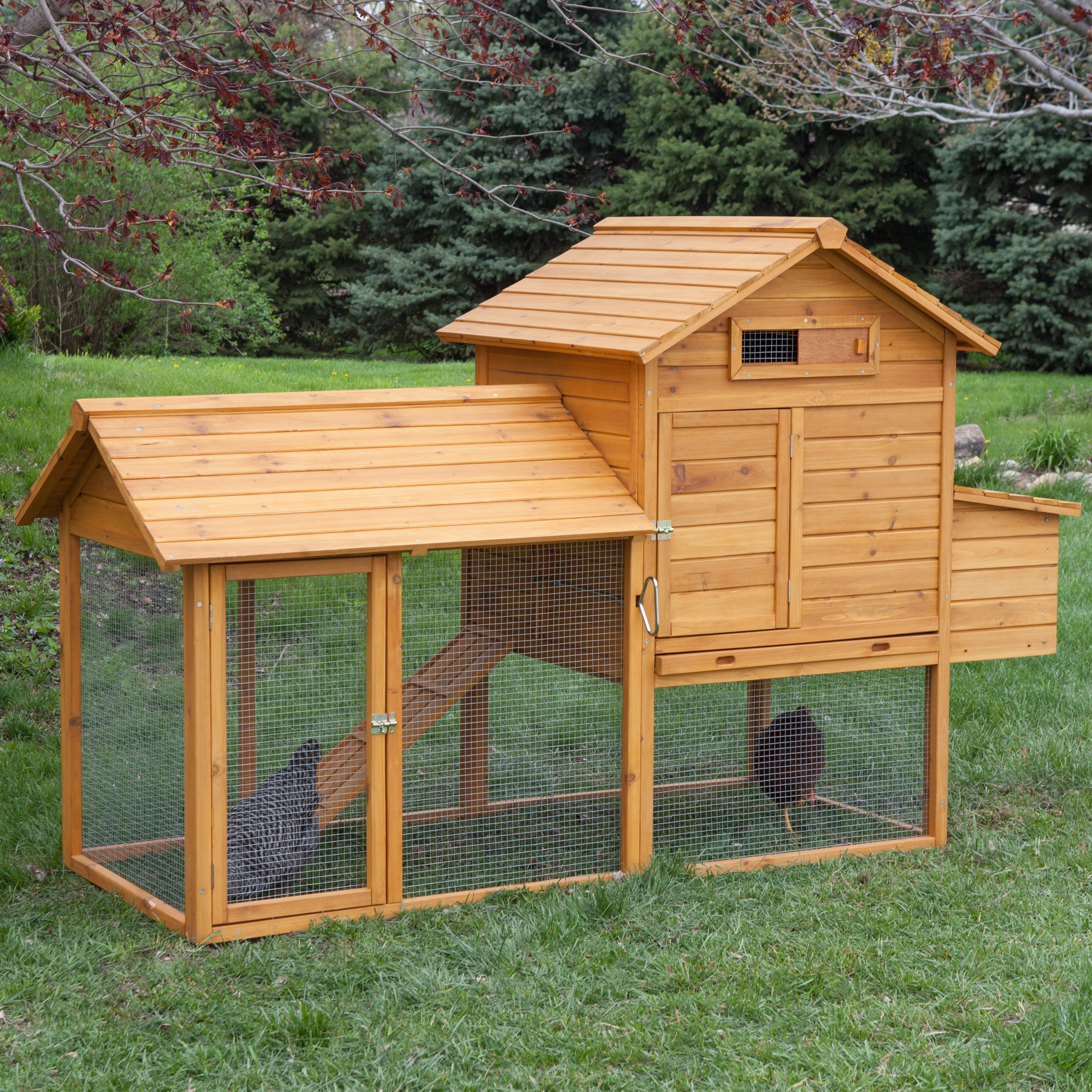 Boomer ; George Tree-Tops 4 Chicken Coop With Run