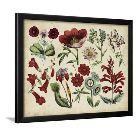 Antique Botanical Chart I Framed Print Wall Art Antique Framed Print