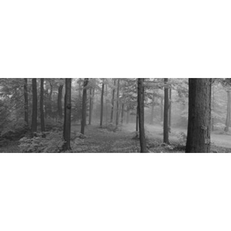 Longaberger Orchard Park Plaid (Chestnut Ridge Park Orchard Park New York State USA Poster Print)