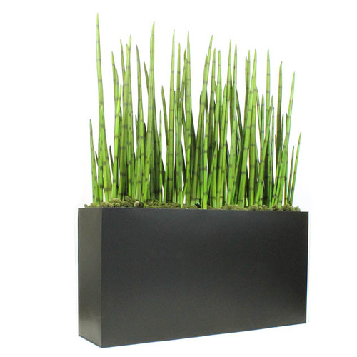 Dalmarko Designs Snake Grasses in Planter