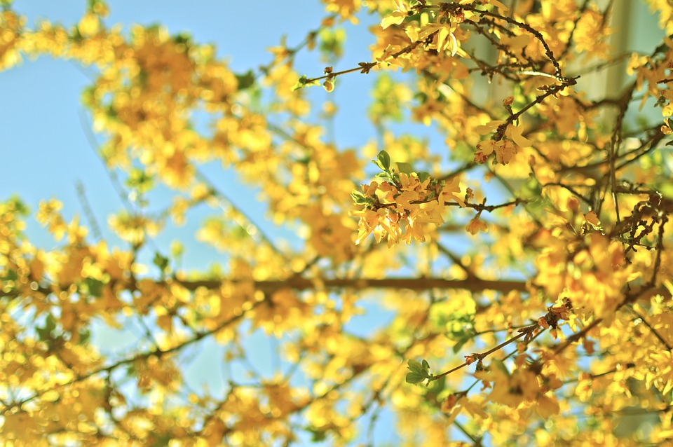 LAMINATED POSTER Season Spring Nature Bright Yellow Outdoor Tree Poster 24x16 Adhesive Decal by