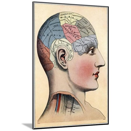 Phrenology Chart Showing Presumed Areas Of Activity The Brain C1920 Wood Mounted Print