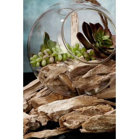 Small Driftwood 1lb Vase Terrarium Filler 3 4in Long Walmart