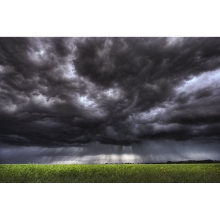 Summer Storm Clouds Over An Unripened Canola Field North Of Edmonton Alberta PosterPrint