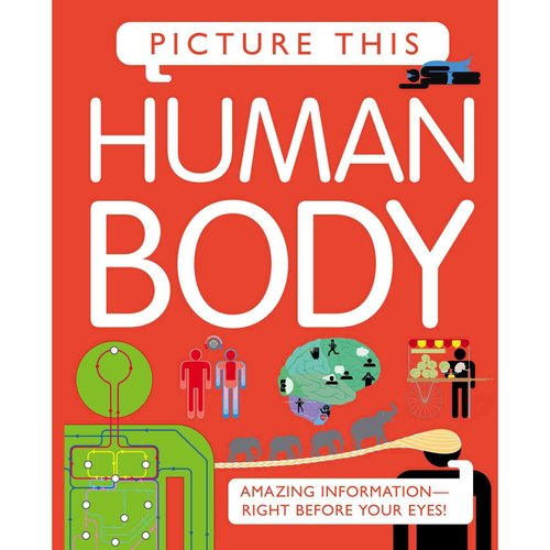 Human Body: Amazing Information-Right Before Your Eyes!