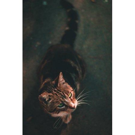 Framed Art For Your Wall Blur Animal Cat Kitten Pet 10x13 Frame