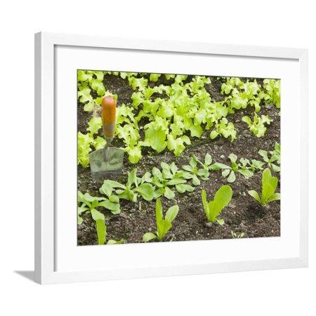 Ashleys Garden Armoire - Home Vegetable Garden Framed Print Wall Art By Ashley Cooper