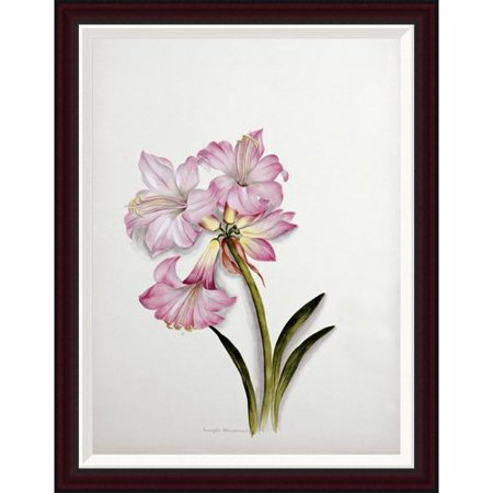 Belladonna Two Light - Global Gallery Amaryllis Belladonna by Ethel May Dixie Framed Painting Print
