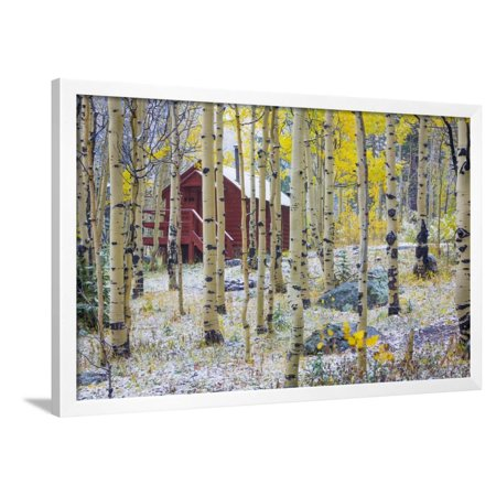 USA, Colorado, Grand Mesa. Solitary Cabin in a Forest Framed Print Wall Art By Jaynes