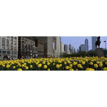 Tulip flowers in a park with buildings in the background Grant Park South Michigan Avenue Chicago Cook County Illinois USA Poster Print](Halloween Usa Stores In Michigan)
