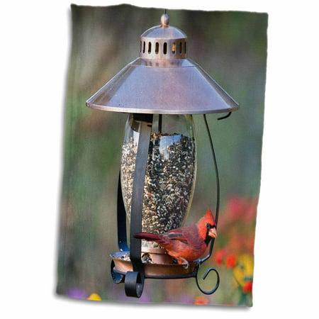 3dRose Northern Cardinal on copper lantern hopper bird feeder, Marion Co. IL - Towel, 15 by 22-inch