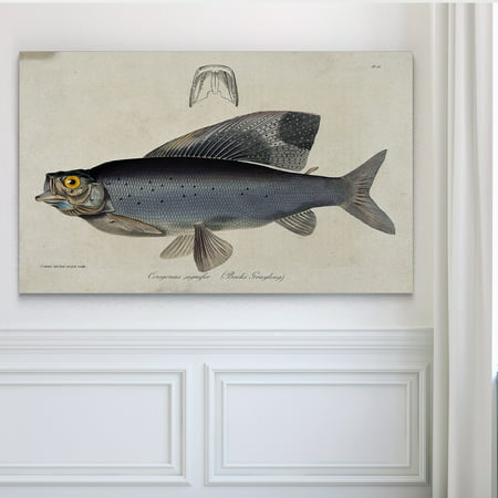 Wexford Home Vintage Fish Study I - Premium Gallery Wrapped Canvas 36x48