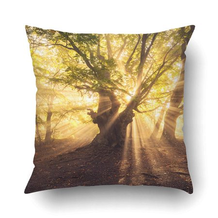 Green Gold Leaves (BPBOP Old Tree With Sun Rays In The Morning Forest Foggy Gold Sunlight Green Leaves Pillowcase Pillow Cushion Cover 16x16)