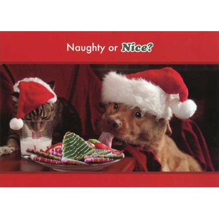 Designer Greetings Naughty or Nice Cat and Dog Christmas Card