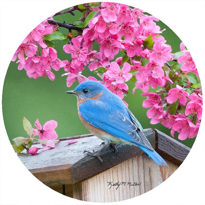 "Andrea's Silicone - 6"" Non-Slip Jar Opener - Spring Bluebird"