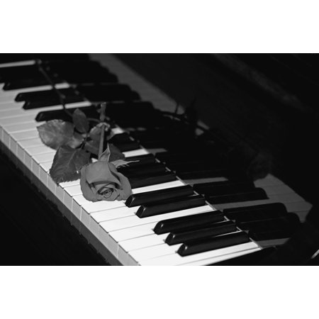 A rose on a piano keyboard Waterloo Quebec Canada Canvas Art - David Chapman  Design Pics (19 x