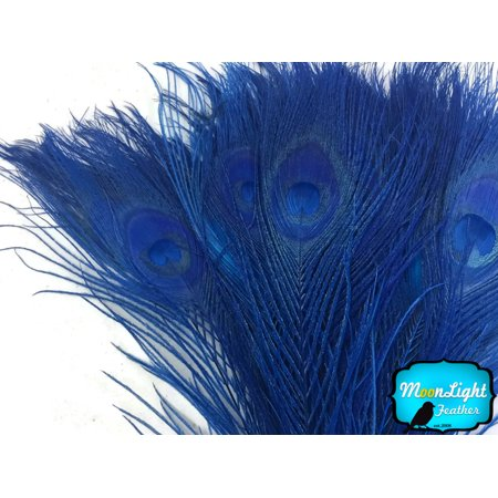 5 Pieces - Royal Blue Bleached And Dyed Tails Peacock - Purple Feather
