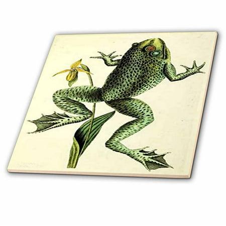 Tyler Frog (3dRose Image of John Audubon Frog Painting - Ceramic Tile, 8-inch )