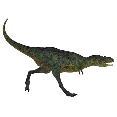 Aucasaurus was a predatory dinosaur from the Cretaceous Period in Argentina and a close relative of Carnotaurus Poster Print