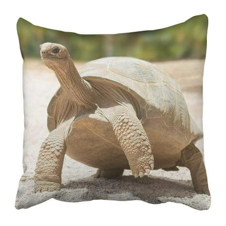 ARTJIA Colorful Turtle Giant Grey Tortoise Standing on Tropical Island White Galapagos Mauritius Reptile Pillowcase 16x16 inch