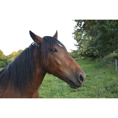 Framed Art for Your Wall Head Profile Horse Equines Portrait Standard Mane 10x13 Frame