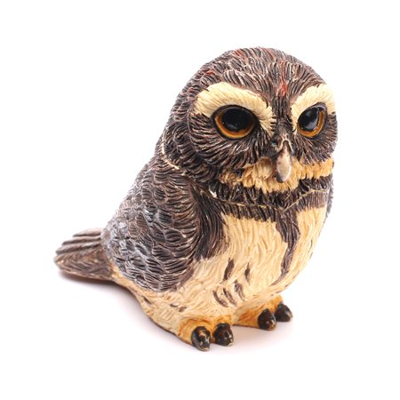 Owl Pot Bellys Box   Pygmy Owl