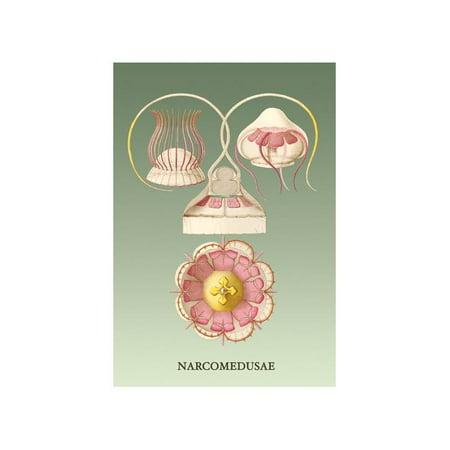 Jellyfish: Narcomedusae Print (Unframed Paper Print 20x30)](Jellyfish Paper)