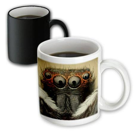 3dRose Jumping spider, Magic Transforming Mug, 11oz