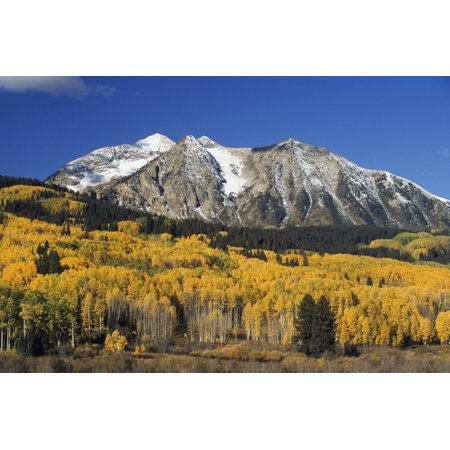 - Aspen Trees In Autumn Rocky Mountains Colorado Usa Stretched Canvas - David Ponton  Design Pics (38 x 24)