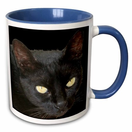 3dRose Black Cat A close up photographic portrait of a halloween black cat with yellow eyes - Two Tone Blue Mug, 11-ounce - Cats Eyes Halloween