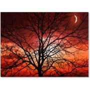 "Trademark Fine Art ""Big Bad Moon"" Canvas Art by Philippe Sainte-Laudy"