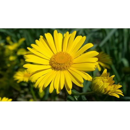 LAMINATED POSTER Yellow Sunshine Spring Flower Poster Print 24 x 36