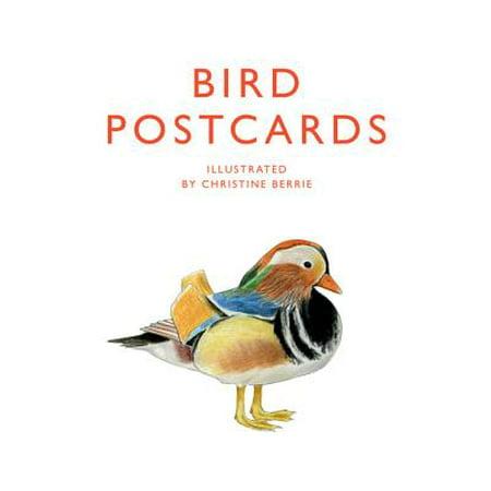 Halloween Postcards Antique (Bird Postcards)