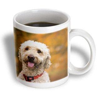 3dRose Massachusetts, Reading, Labradoodle dog - US22 JEN0072 - Jim Engelbrecht, Ceramic Mug, 11-ounce