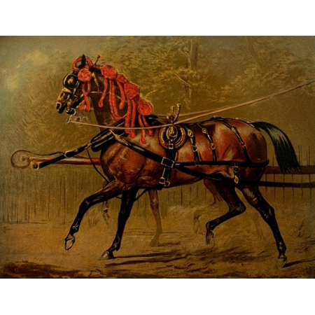 The Book of the Horse 1880 A state carriage horse Canvas Art - Unknown (18 x 24)